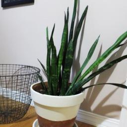 Ep. 08: Plants Pt. 2